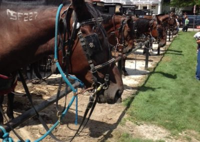 Horses lined up at the Commons